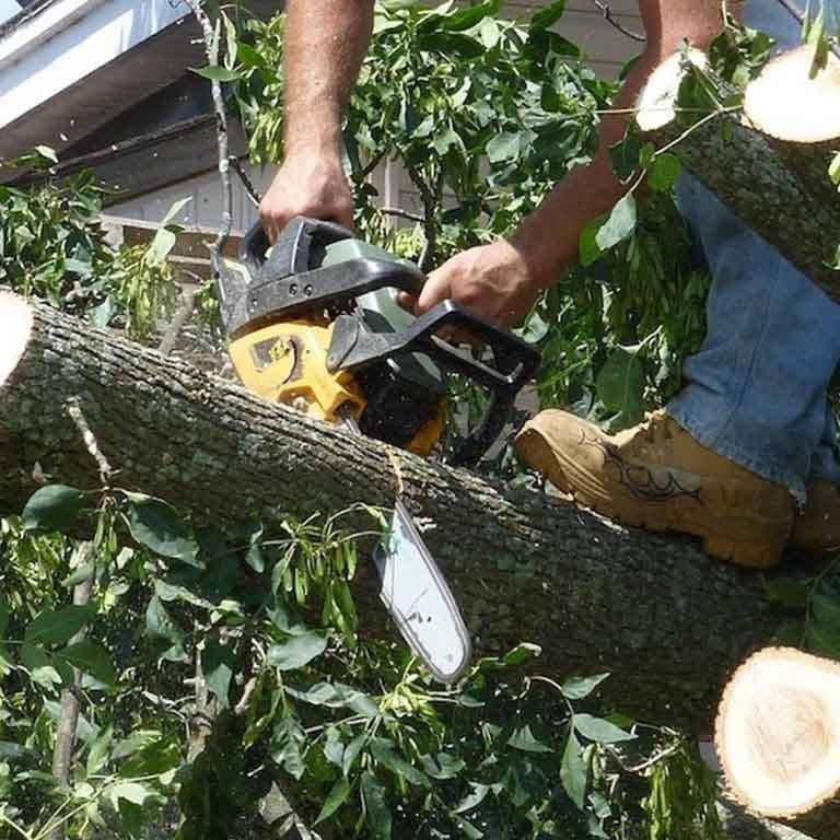 Safe Tree Removal Gresham