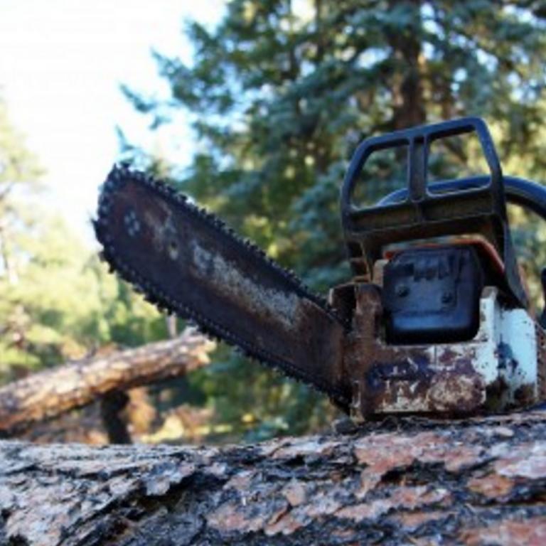 Tree removal Portland and Gresham
