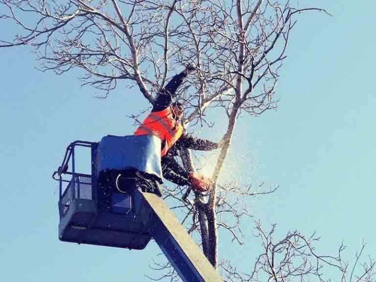 Tree Care Portland Oregon